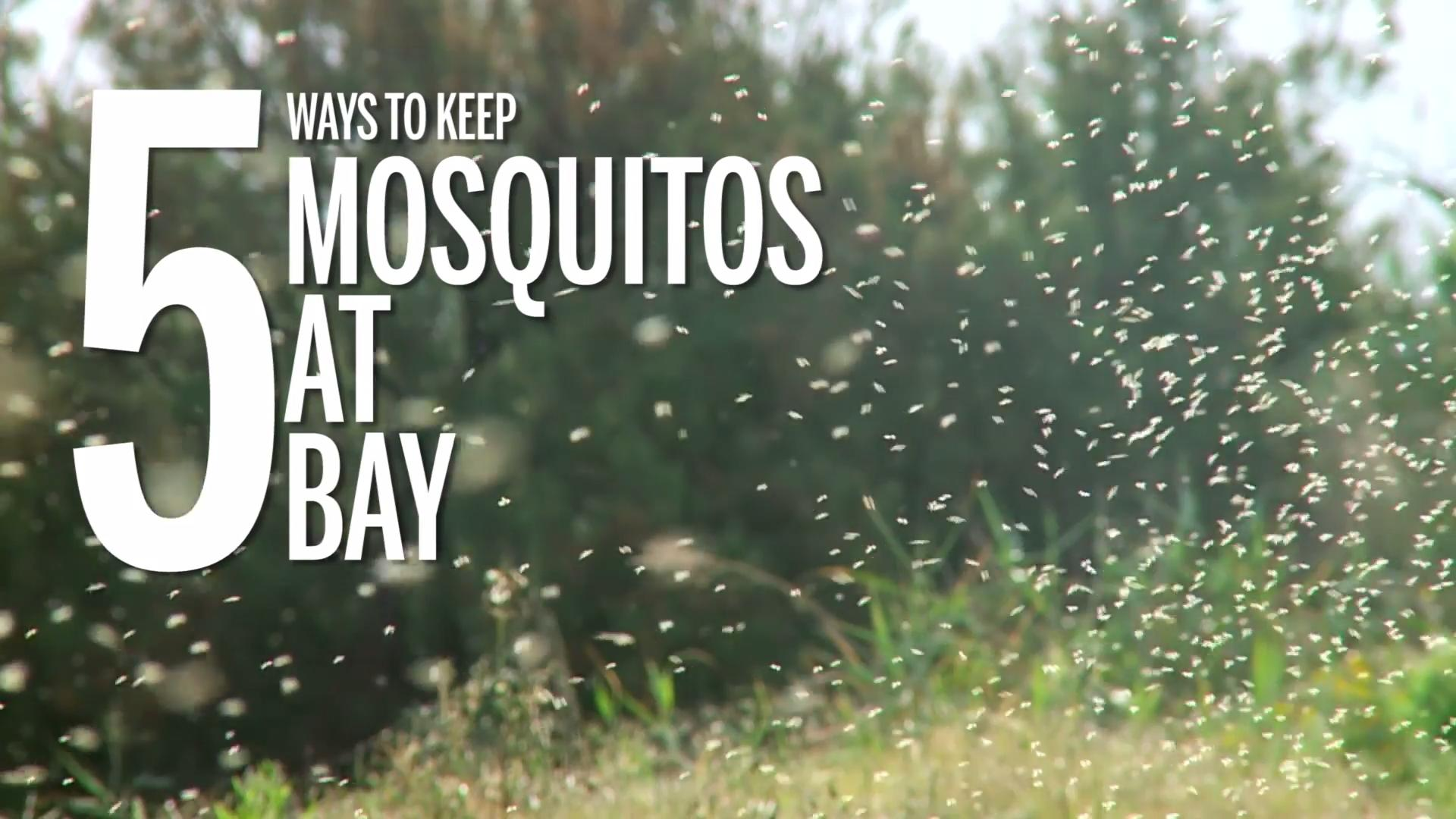 Chikungunya Virus Is the Mosquito-Transmitted Disease You Probably Don't Know About—but Should
