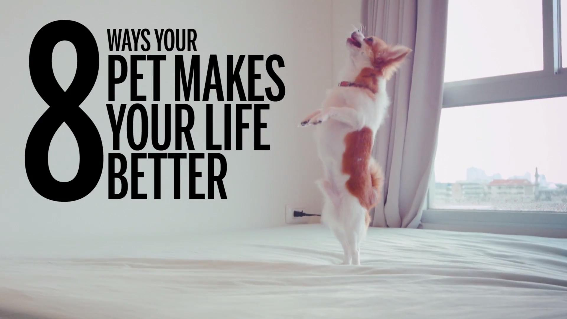 How pets make you happier and healthier