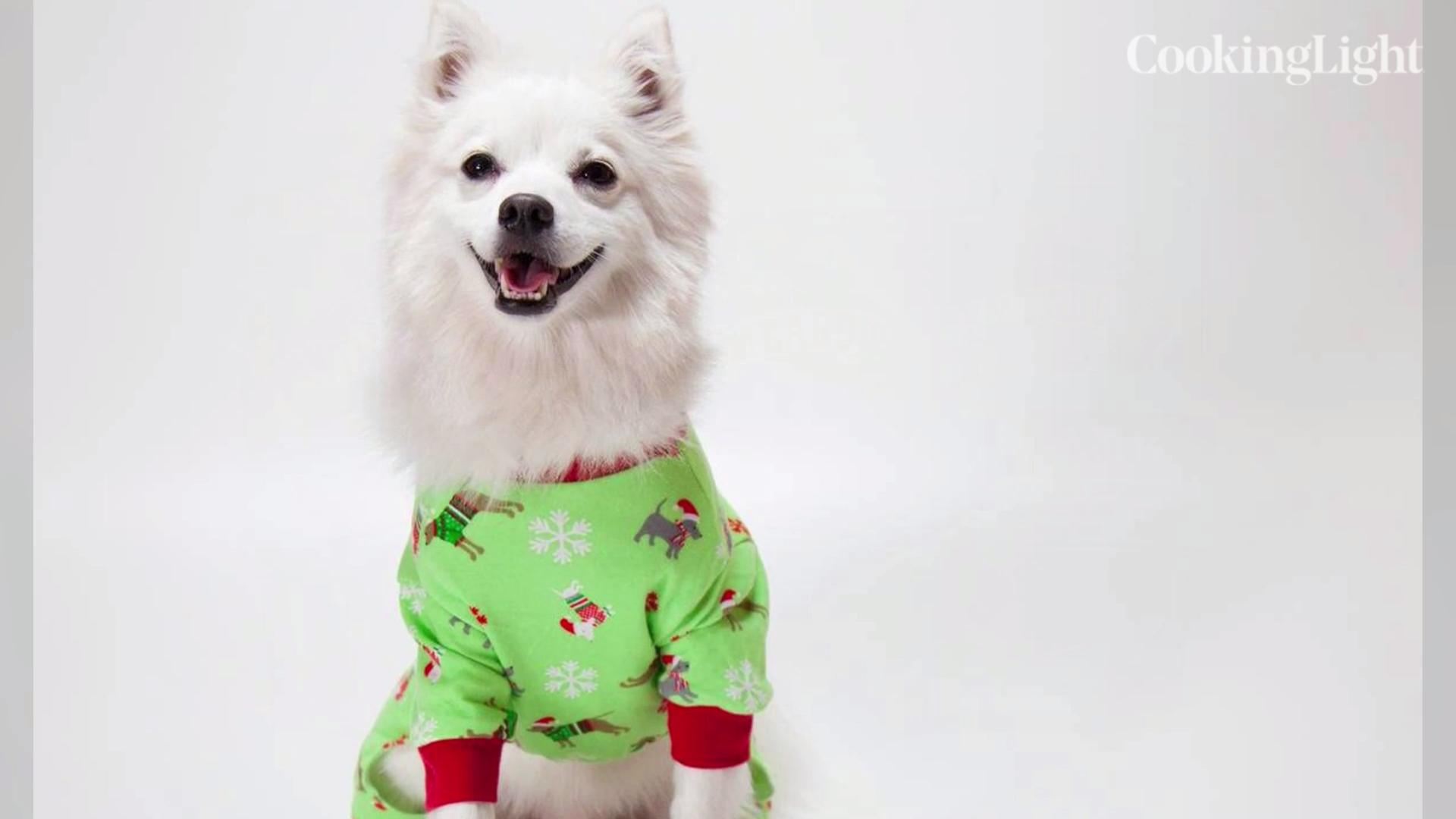 The Best Holiday Pet Gifts of 2018