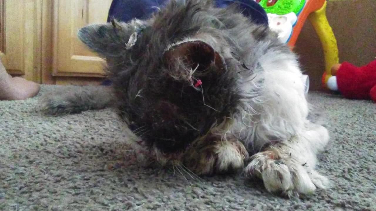 35 'Outdoor Cat' Horror Stories   PETA