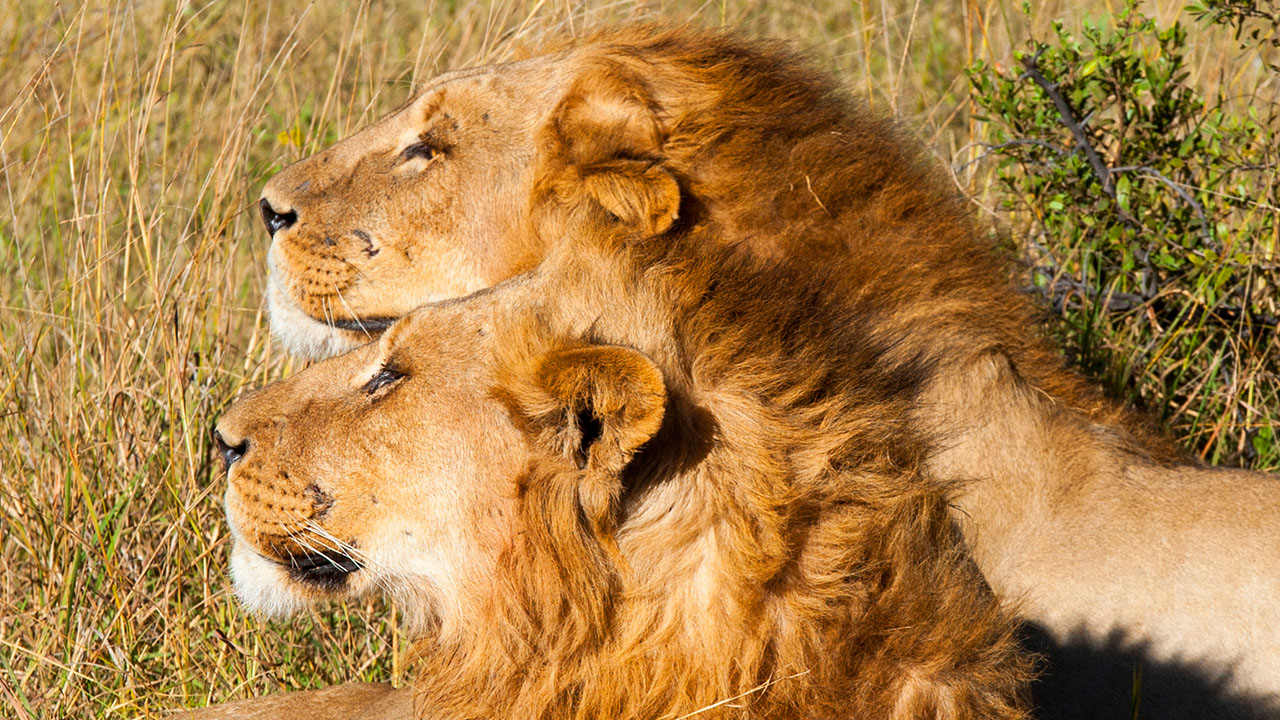 remembering cecil the lion one year later