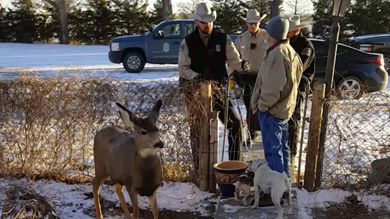 Pet Deer Shot Dead in Front of Horrified Family