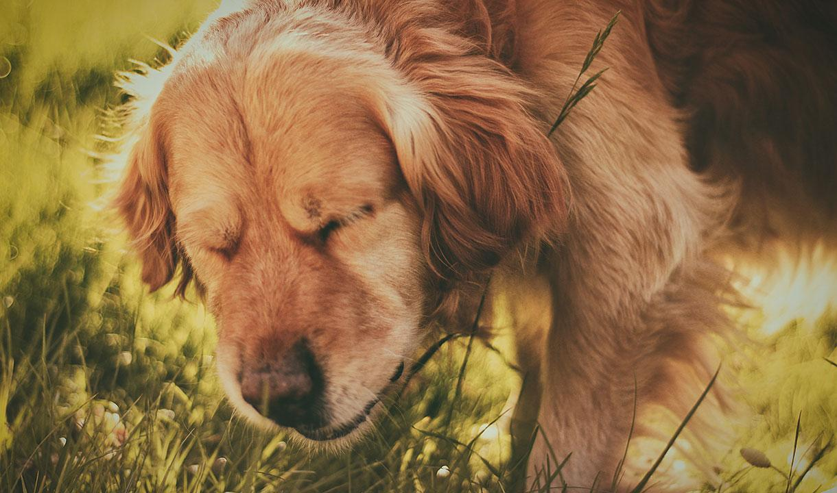 Can a Dog Get the Flu?