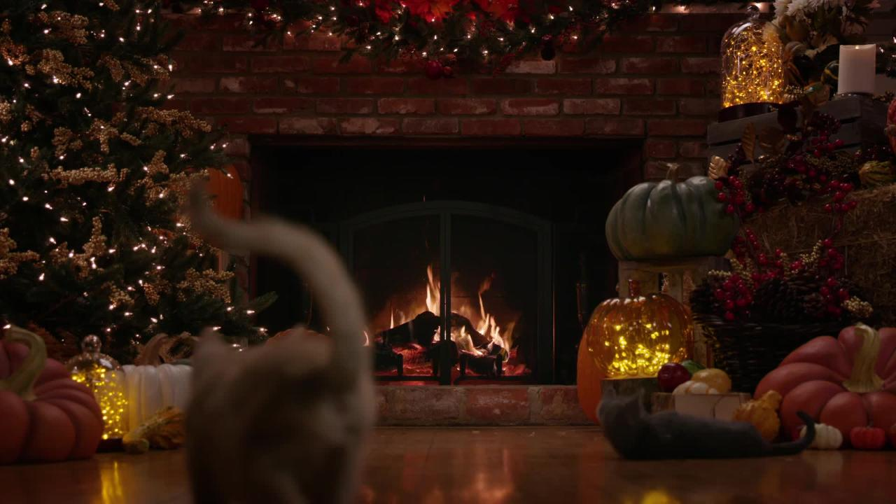 Fireplace Video Hallmarks Happy The Dog 24 Hours Of Yule Log