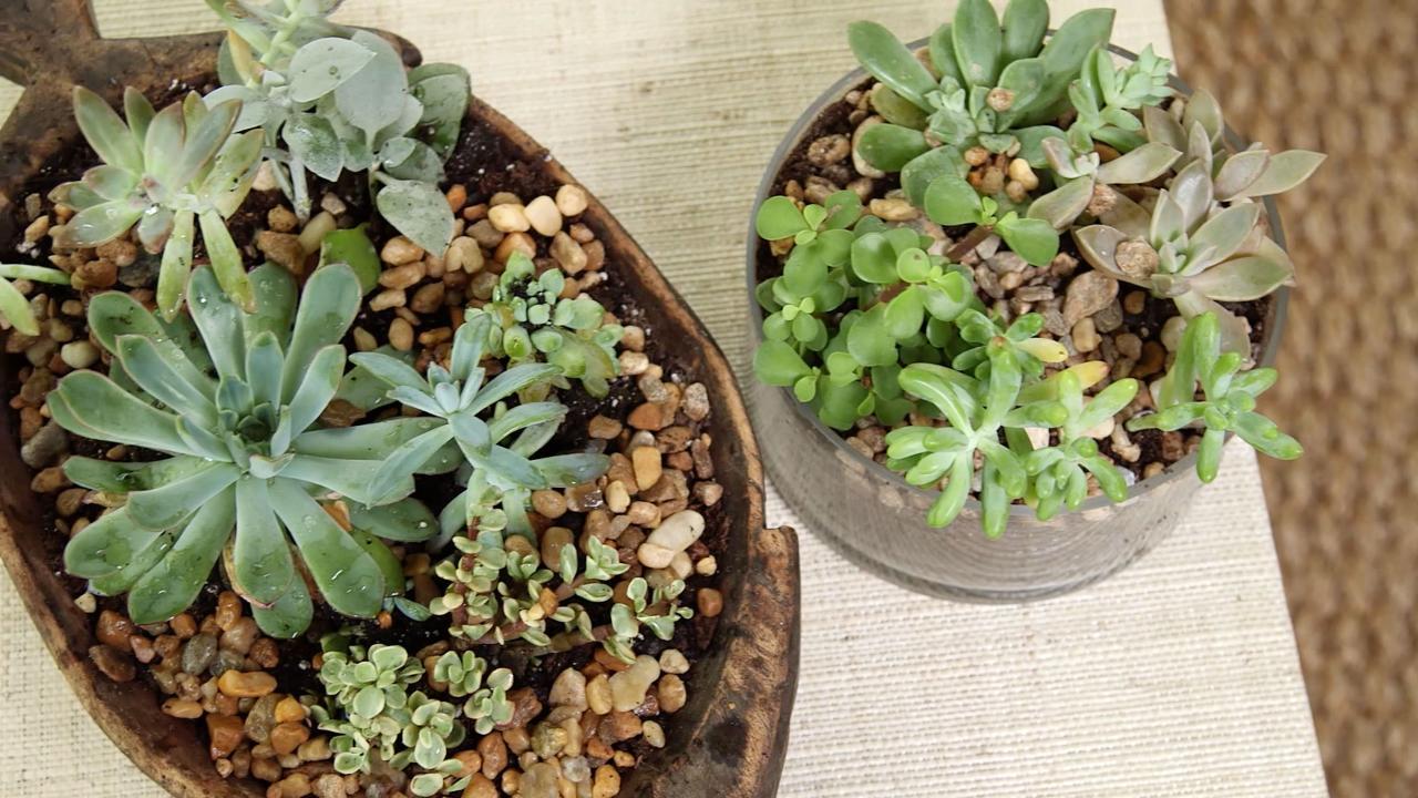 How To Make A Porch Succulent Arrangement