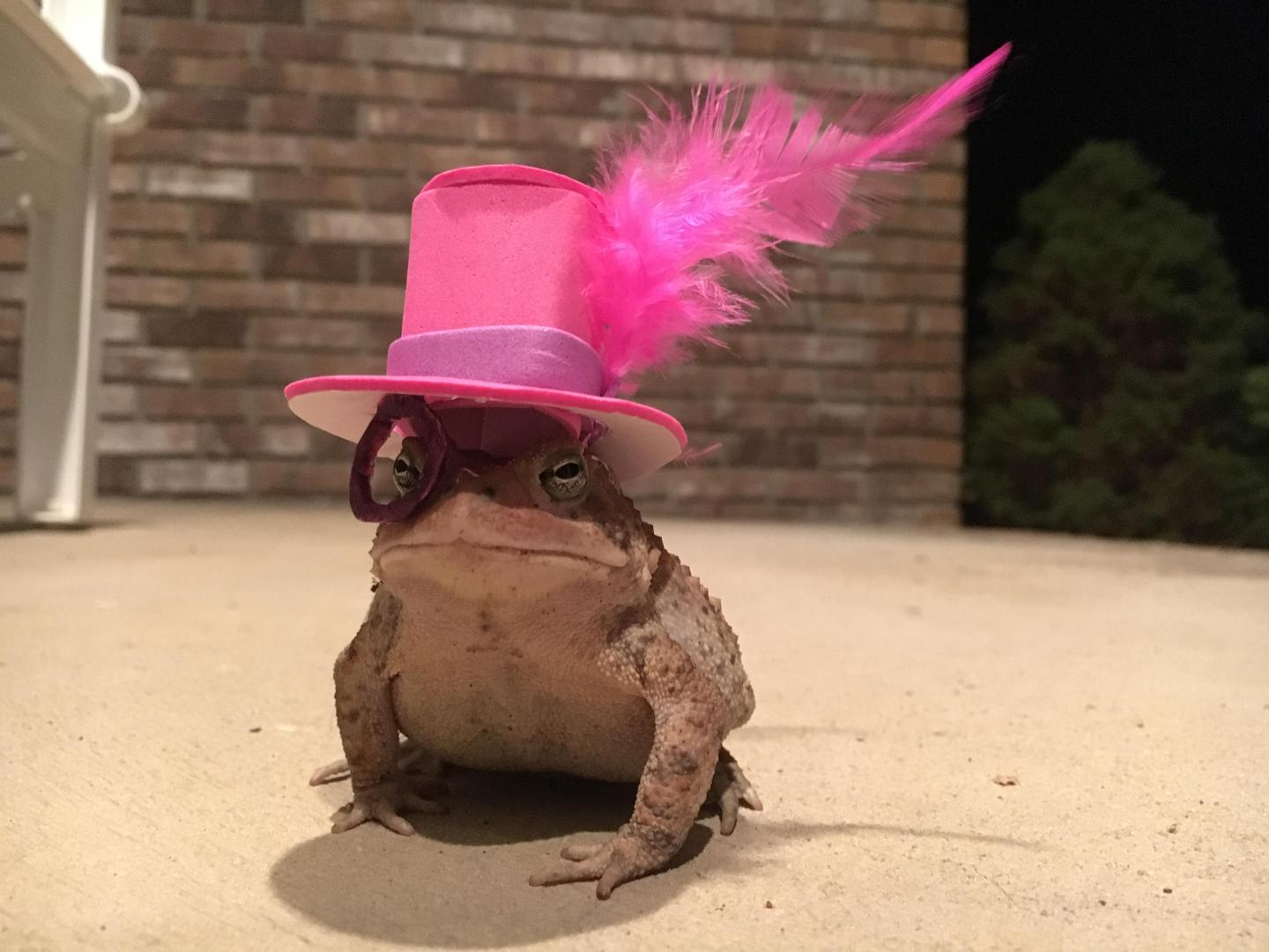 An Alabama Man Makes Incredible Hats For His Little Toad - Southern ...
