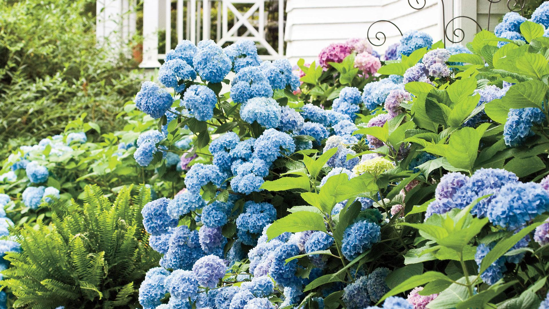 Six Flowers That Sing The Blues Southern Living