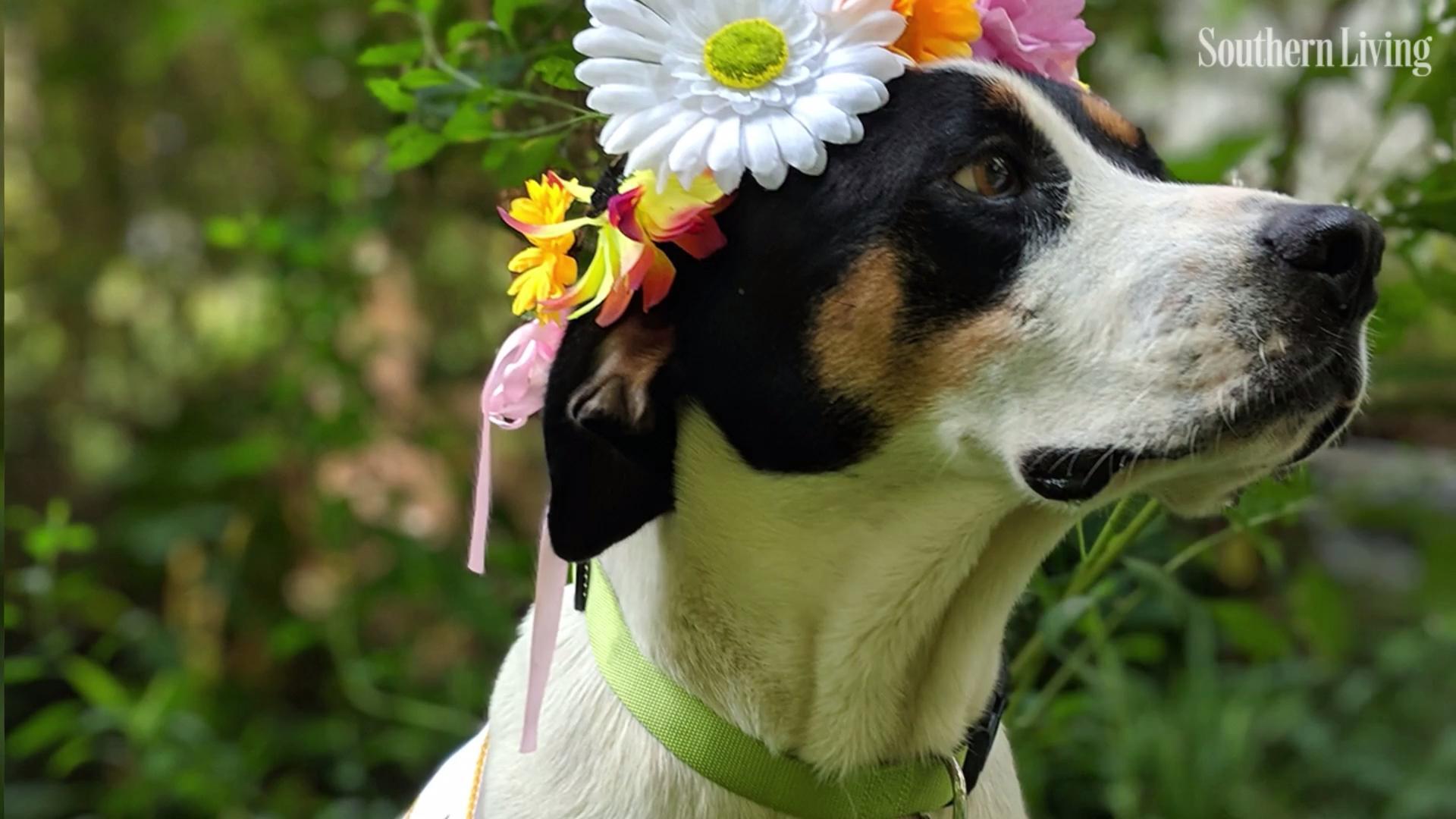Humane Society of Tampa Bay Needs Volunteer Dog Snugglers
