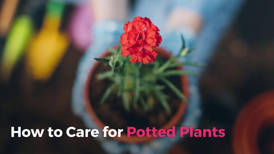 sc 1 st  Real Simple & How to Care for Potted Plants - Real Simple