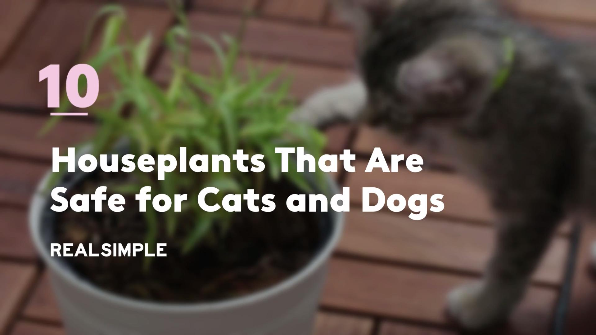 10 Houseplants That Are Safe For Cats And Dogs Real Simple