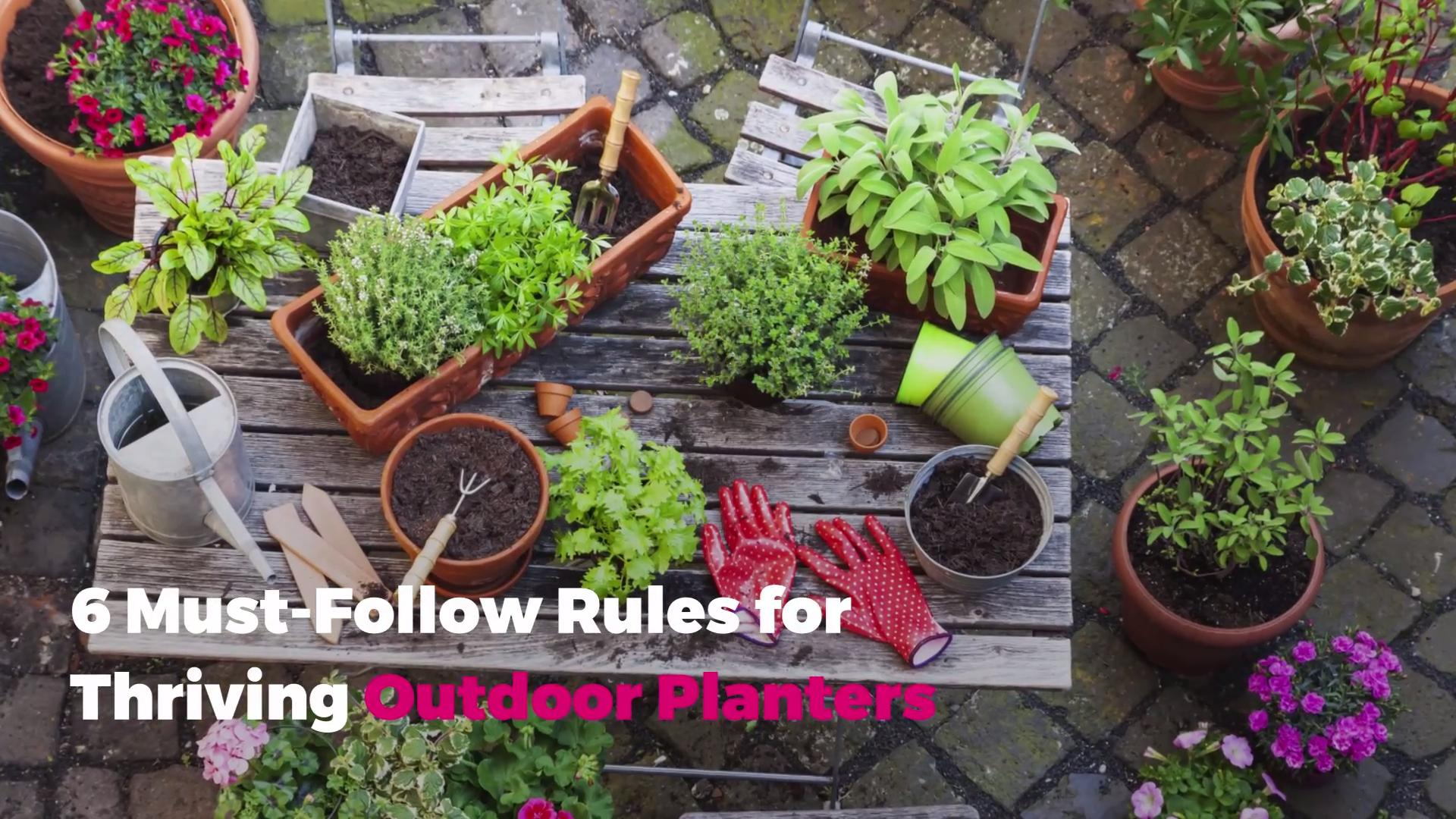 6 Must-Follow Rules for Thriving Outdoor Planters