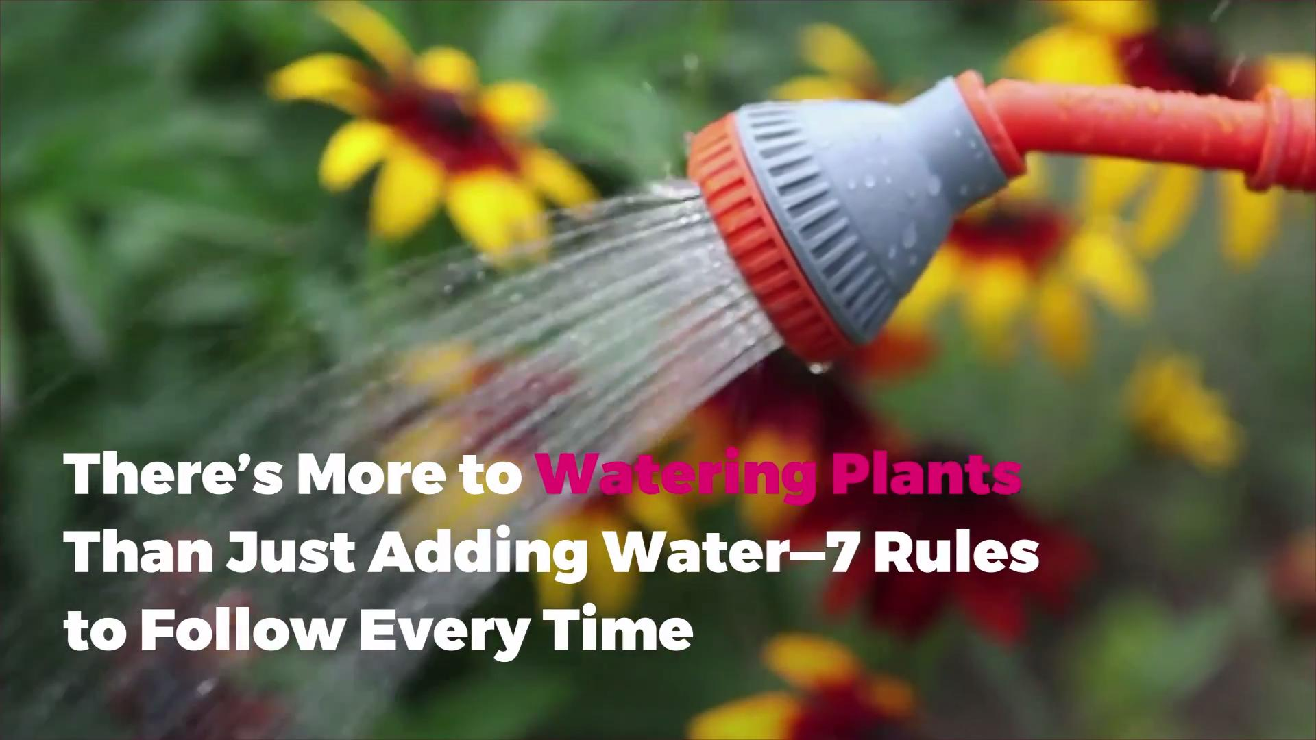 There's More to Watering Plants Than Just Adding Water—7 Rules to Follow Every Time